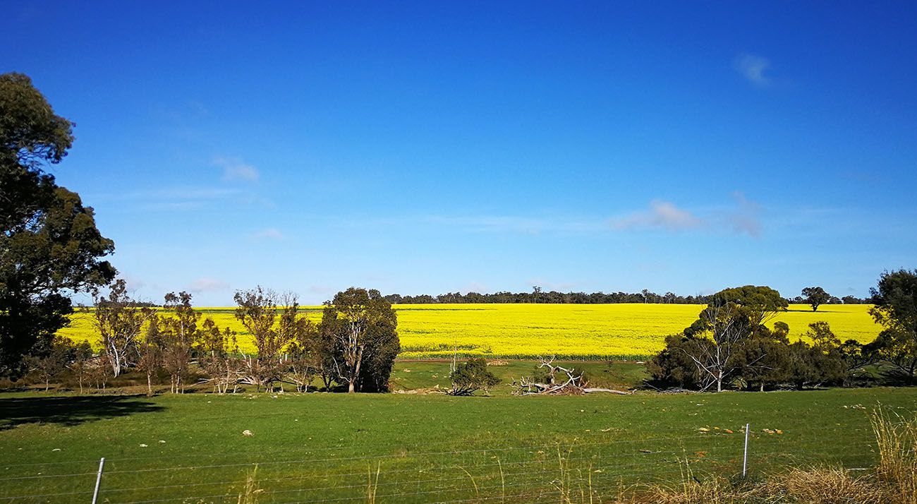 Farm in Western Australia